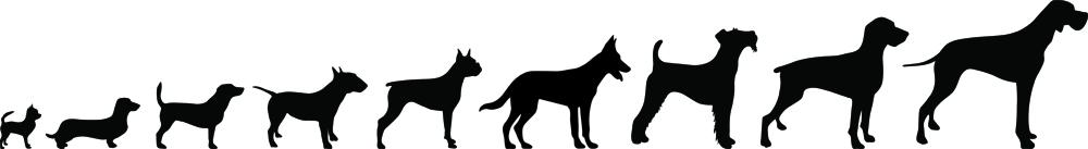 Silhouette mehrere Hunde der Größe nach aufgestellt
